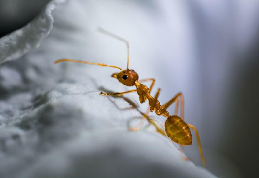 Смотреть бесплатно красивые фото рыжих муравьев на природе