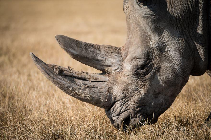 Смотреть красивые картинки носорог на природе