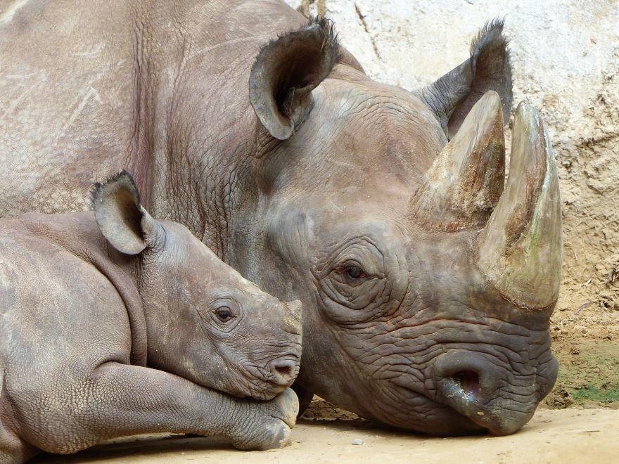 Смотреть лучшее фото носорога бесплатно