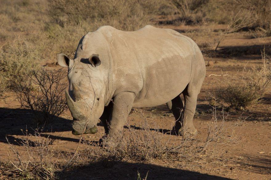 Смотреть бесплатно лучшие картинки носорога на природе