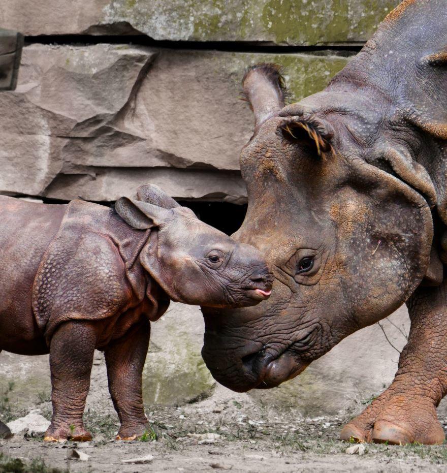 Смотреть красивое фото на природе белый носорог