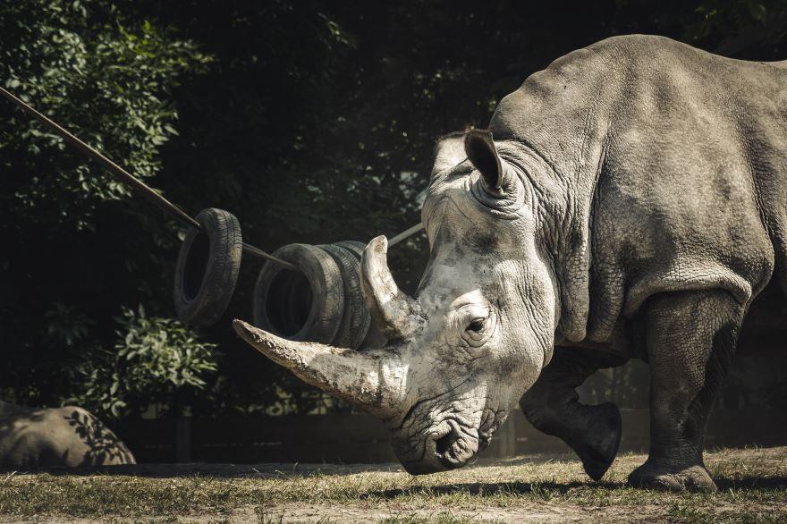 Скачать бесплатно картинку носорога в хорошем качестве