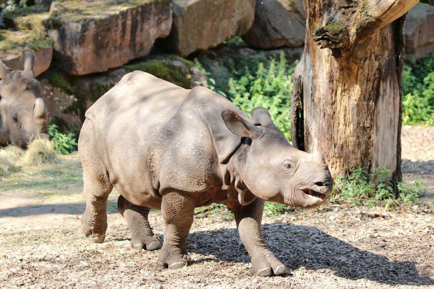 Лучшее фото носорога с детенышем как они отдыхают