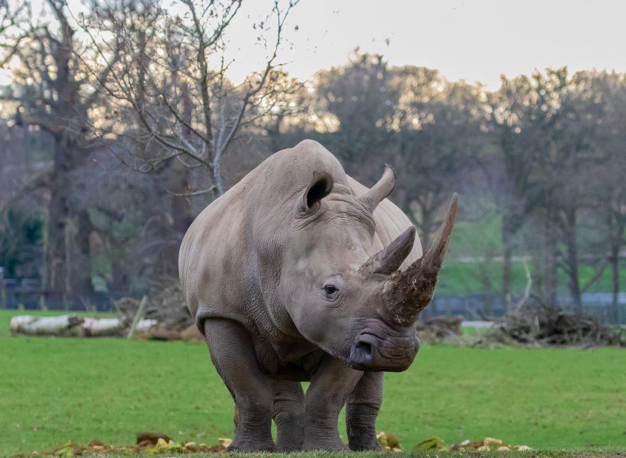 Скачать онлайн бесплатно красивое фото носорога