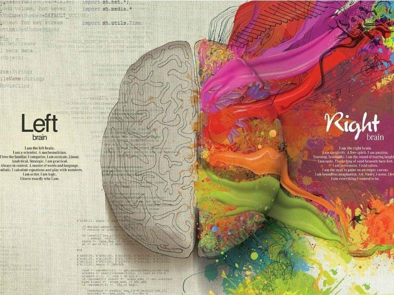 Суперинтуиция, левое и правое полушария мозга
