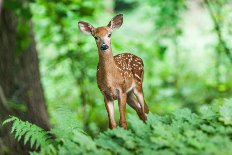 Лучшее фото оленя на природе