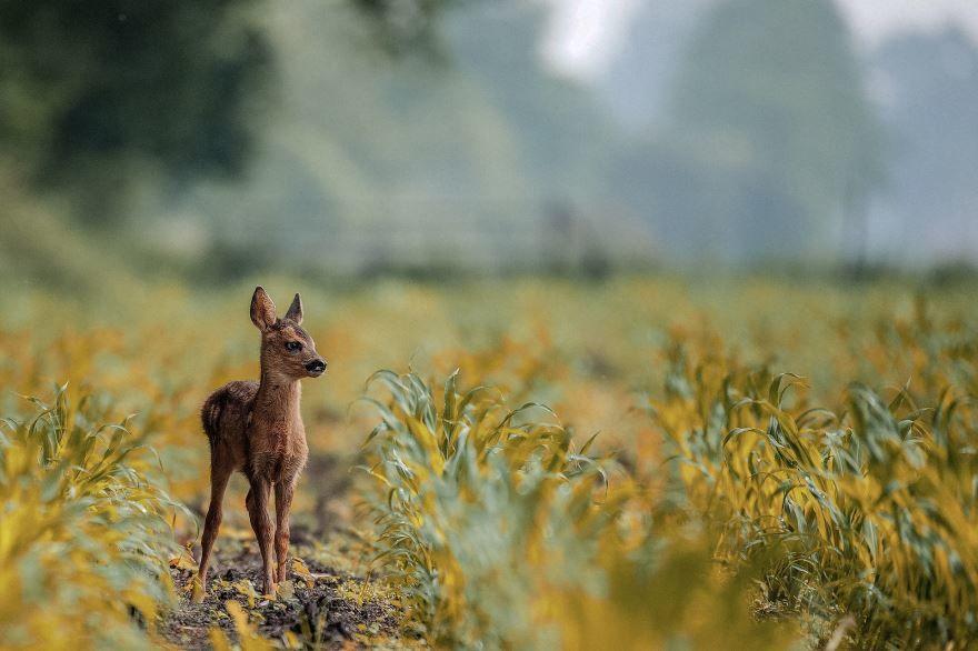 Смотреть бесплатно лучшие картинки оленя на природе