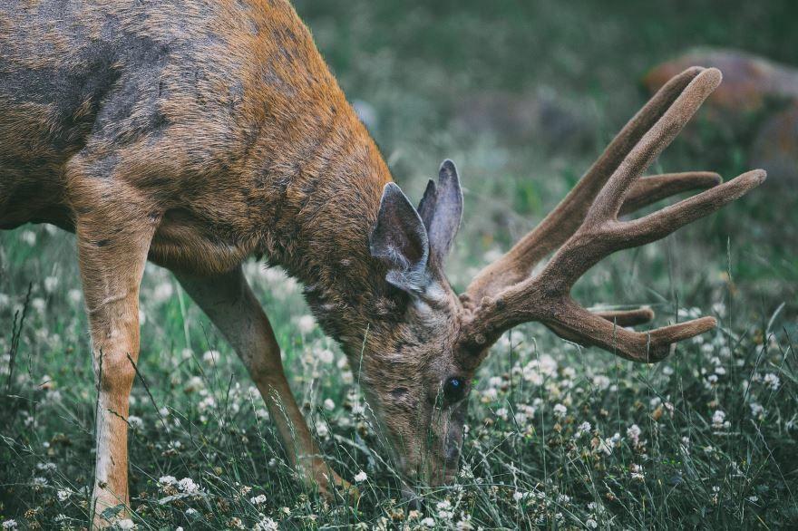 Смотреть красивые картинки дикий лесной олень на природе