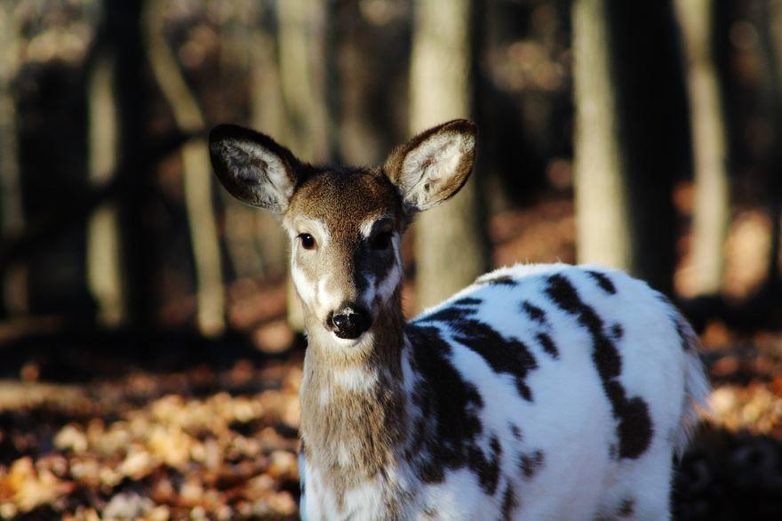 Красивое, необычное фото лесного оленя