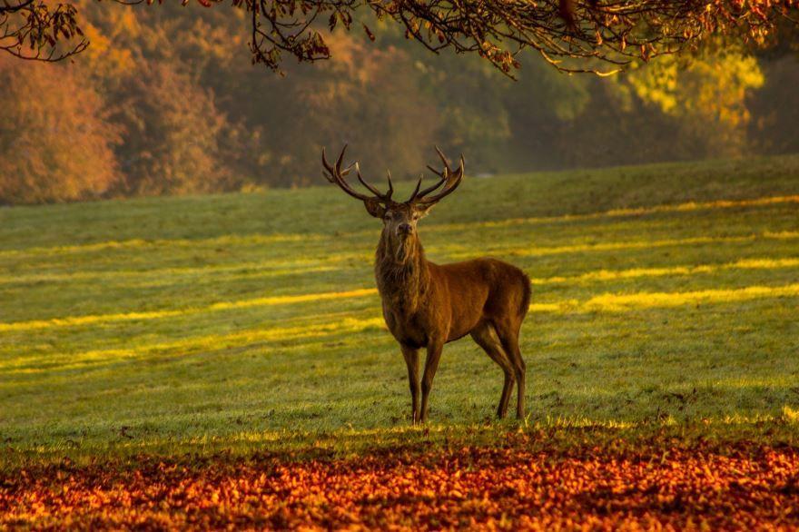 Скачать бесплатно картинку лесного оленя в хорошем качестве