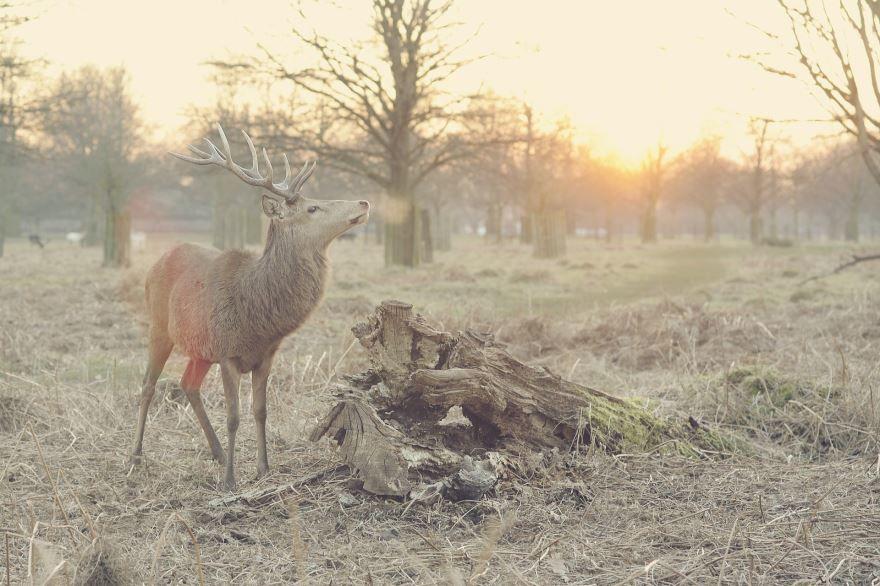 Скачать бесплатно картинку оленя в хорошем качестве