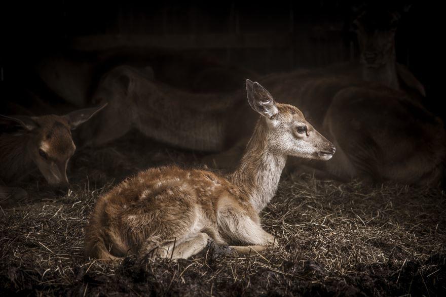 Красивое, необычное фото оленя