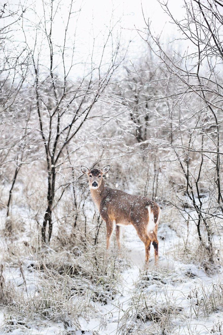Смотреть красивые картинки олень на природе