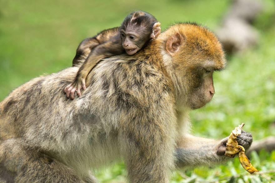 Смотреть лучшее фото обезьяны бесплатно