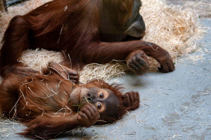 Красивое фото необычной обезьяны