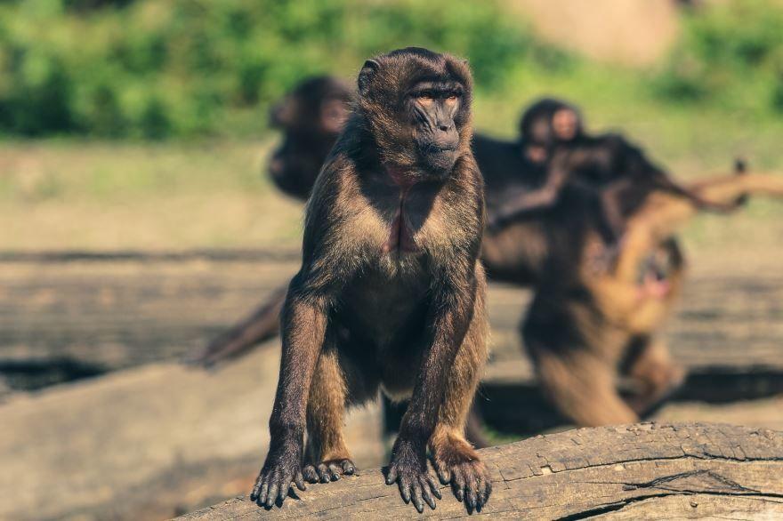 Скачать бесплатно картинку обезьяны в хорошем качестве