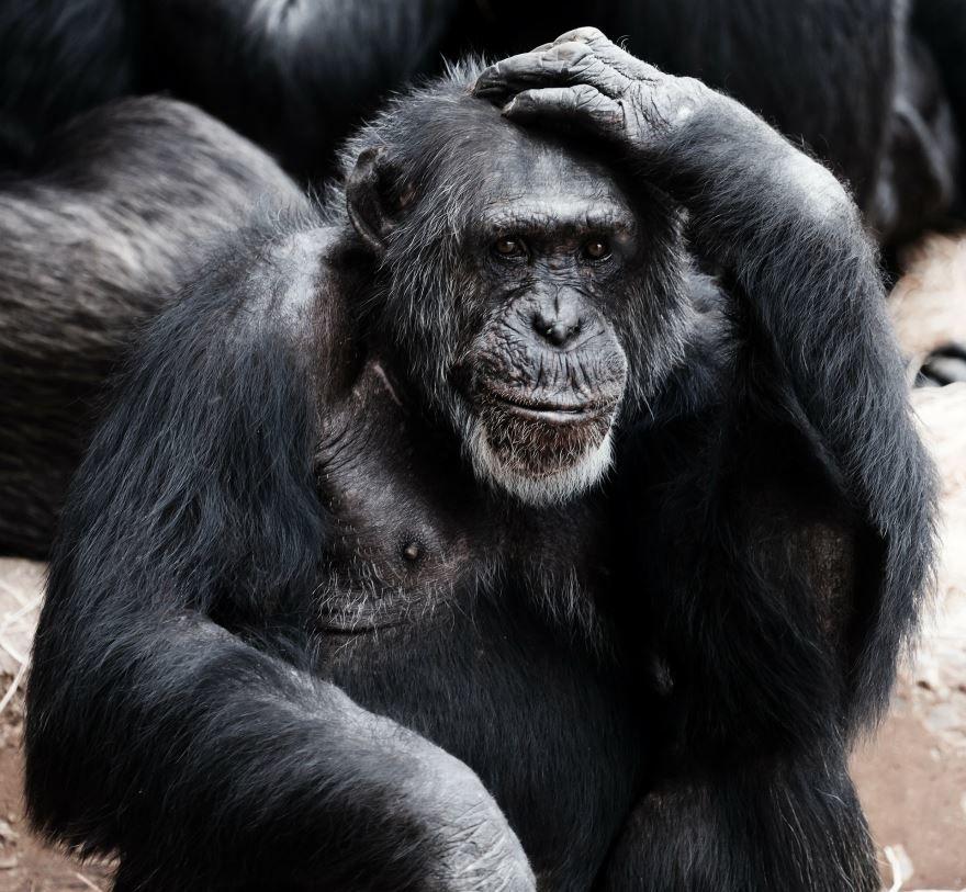 Смотреть интересное фото трех обезьян