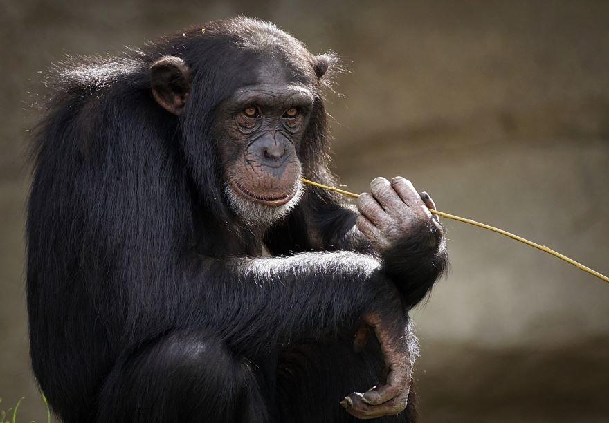 Смотреть лучшее фото обезьяна на природе со своим детенышем