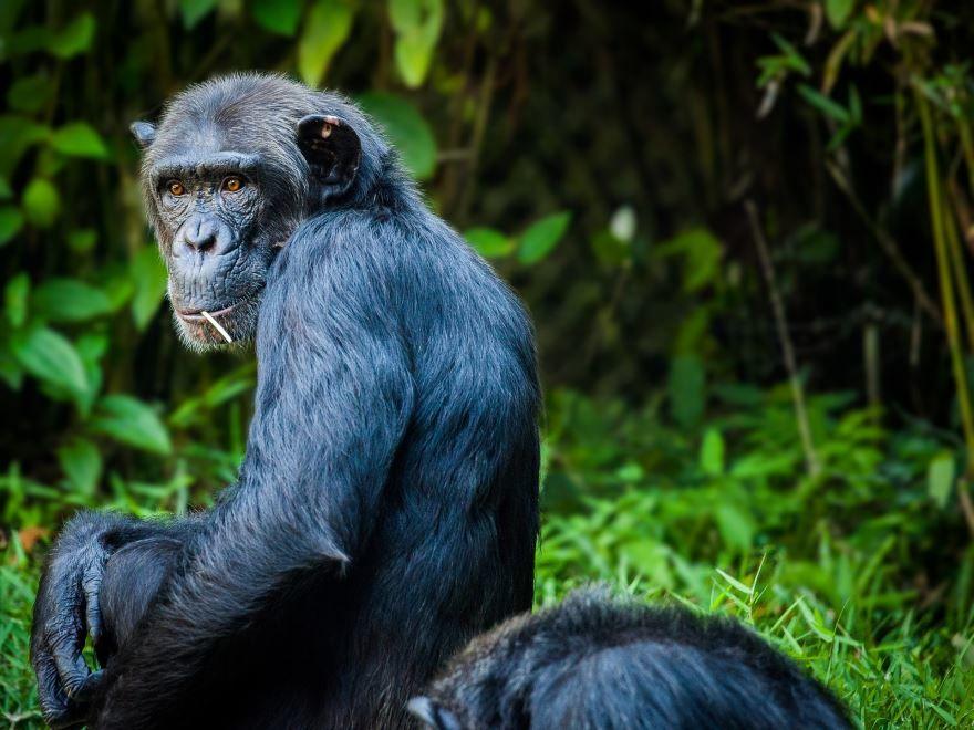 Красивое, необычное фото обезьяны на природе