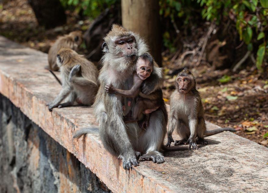 Смотреть красивое фото милой обезьянки