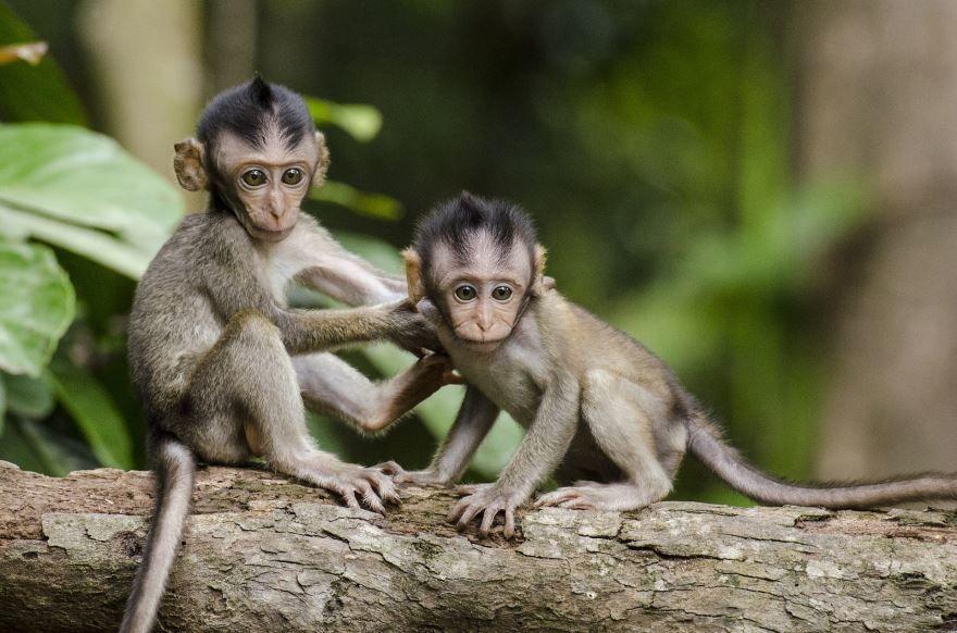 Картинка лучшей обезьянки на природе
