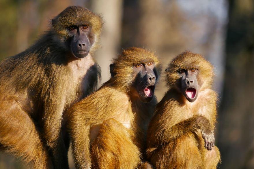 Смотреть красивую картинку обезьяны на природе