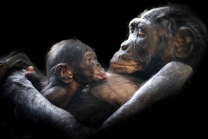 Смотреть смешные до слез картинки про обезьян
