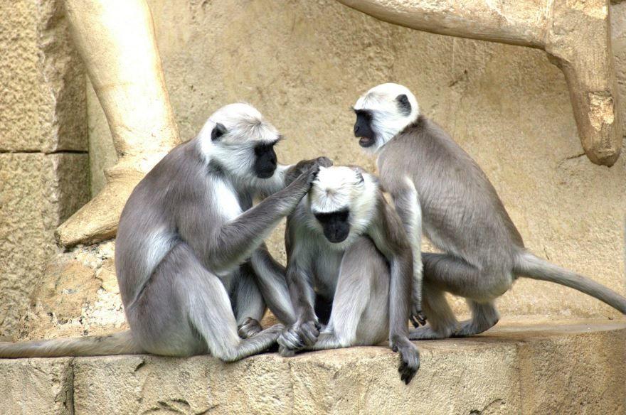 Смотреть прикольные фото про обезьян