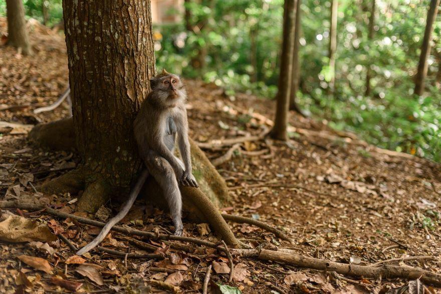 Скачать онлайн бесплатно фото необычной обезьянки