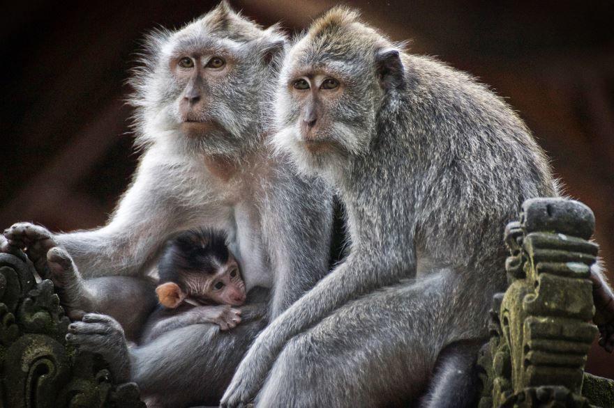 Смотреть красивые картинки маленькие обезьянки в природе