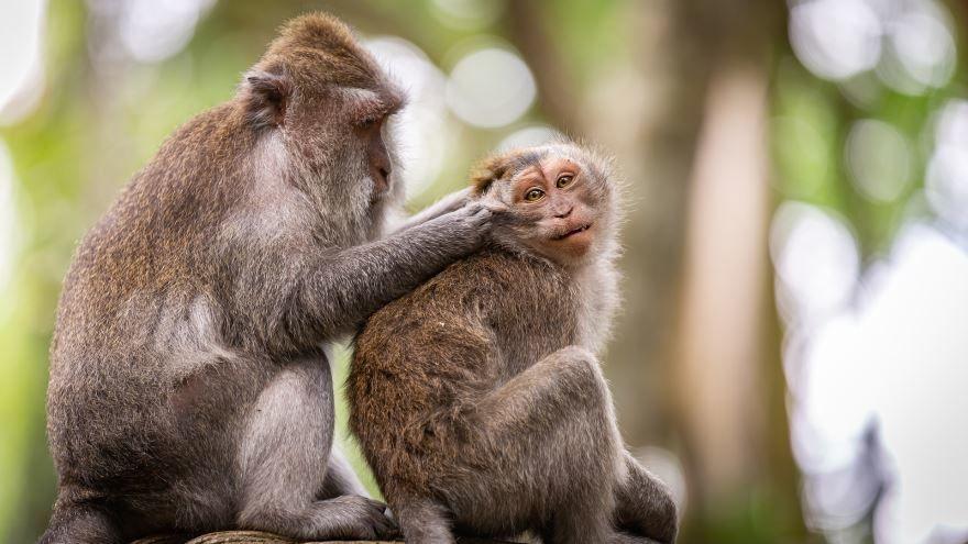 Смотреть картинку носатая обезьяна крупным планом