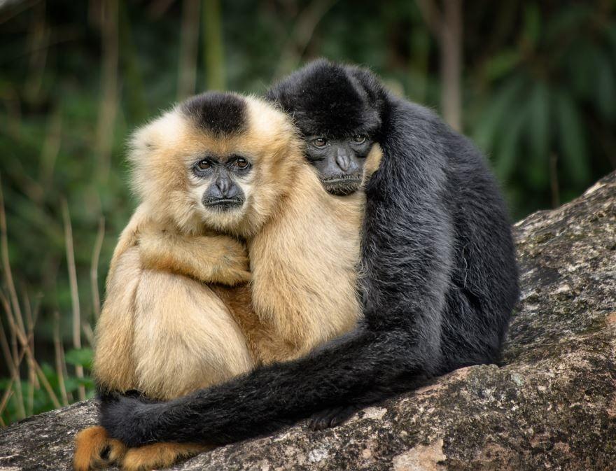 Смотреть фото черной обезьяны на природе