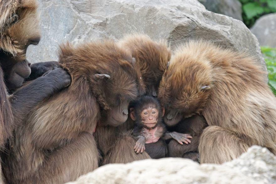 Смотреть интересное фото три обезьяны
