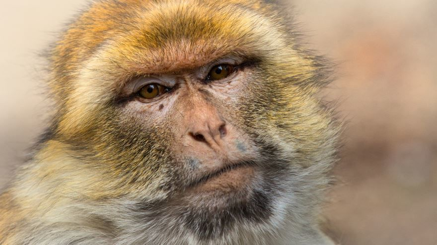 Фото мама обезьяна с детенышем на природе