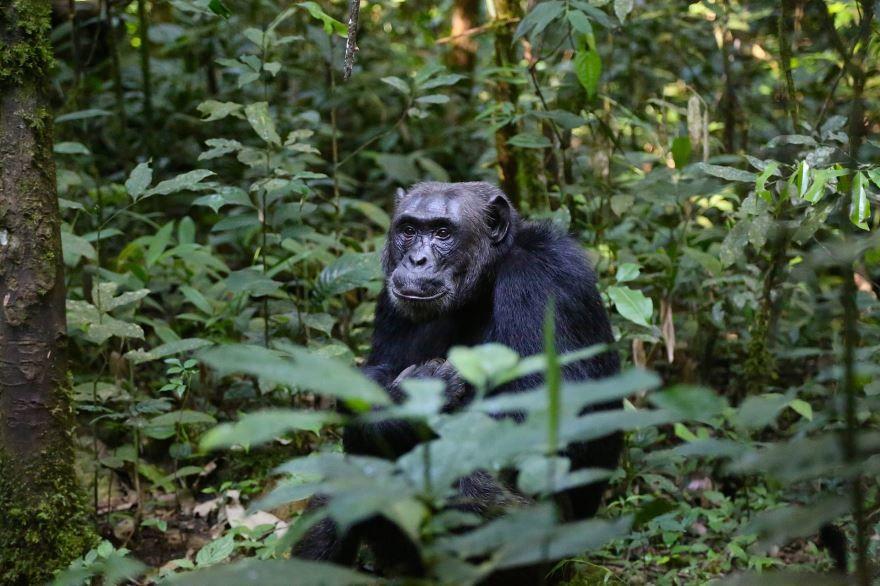 Красивое фото про обезьянку