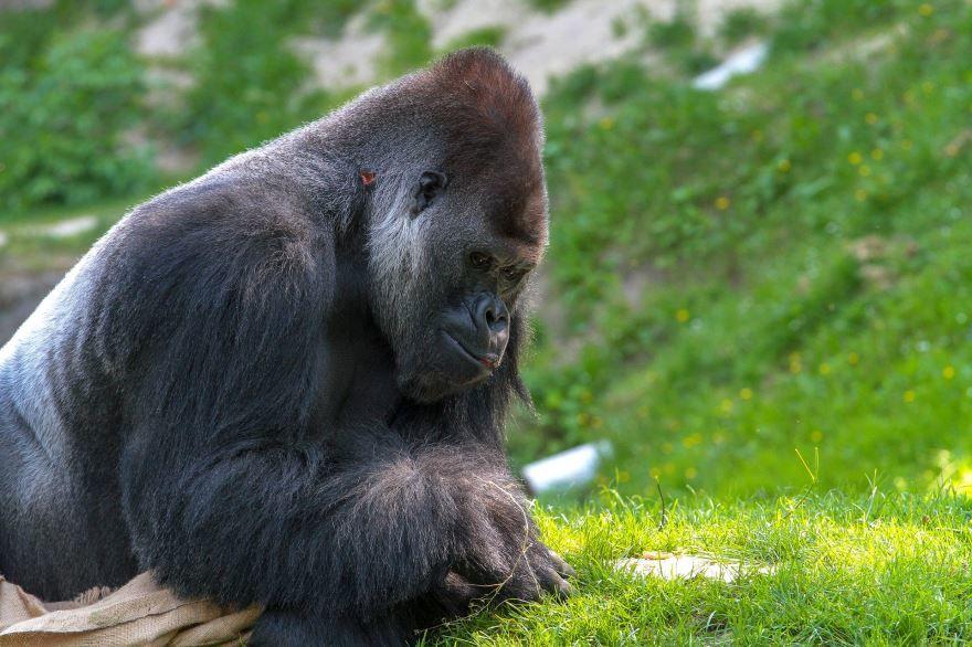 Лучшее фото маленькой обезьянки
