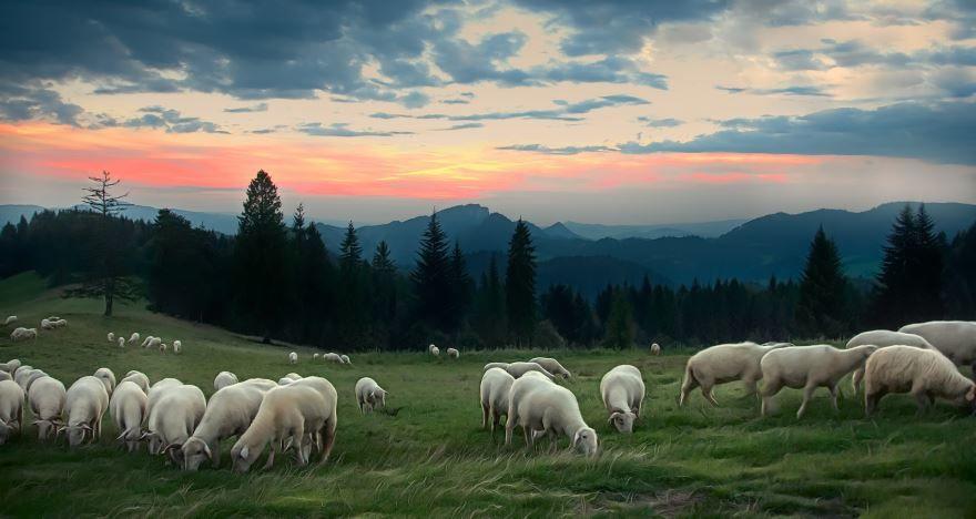 Смотреть красивое фото про овец