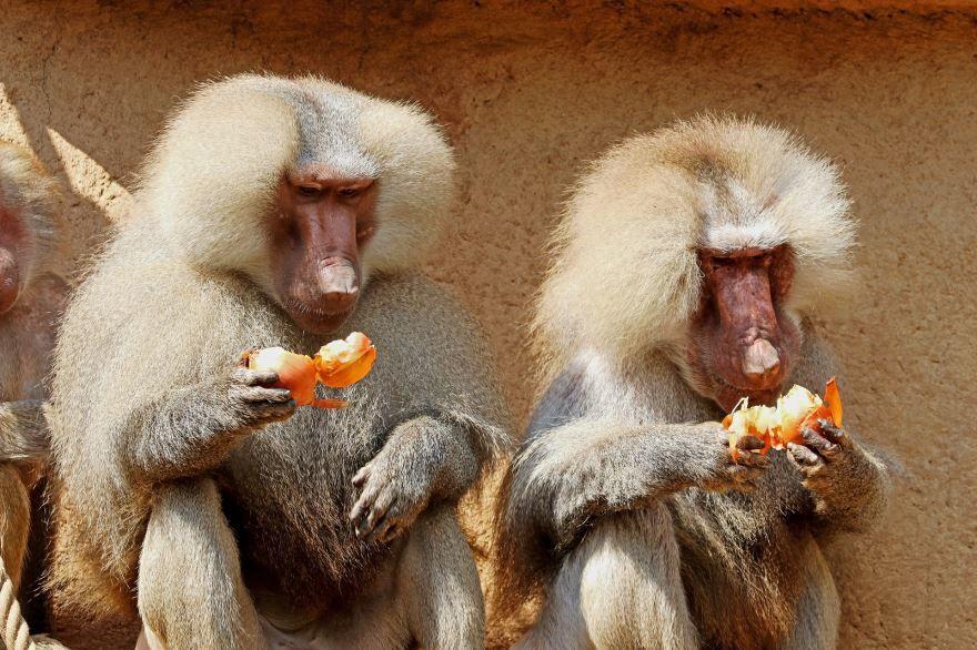 Смотреть красивые картинки дикой обезьяны на природе