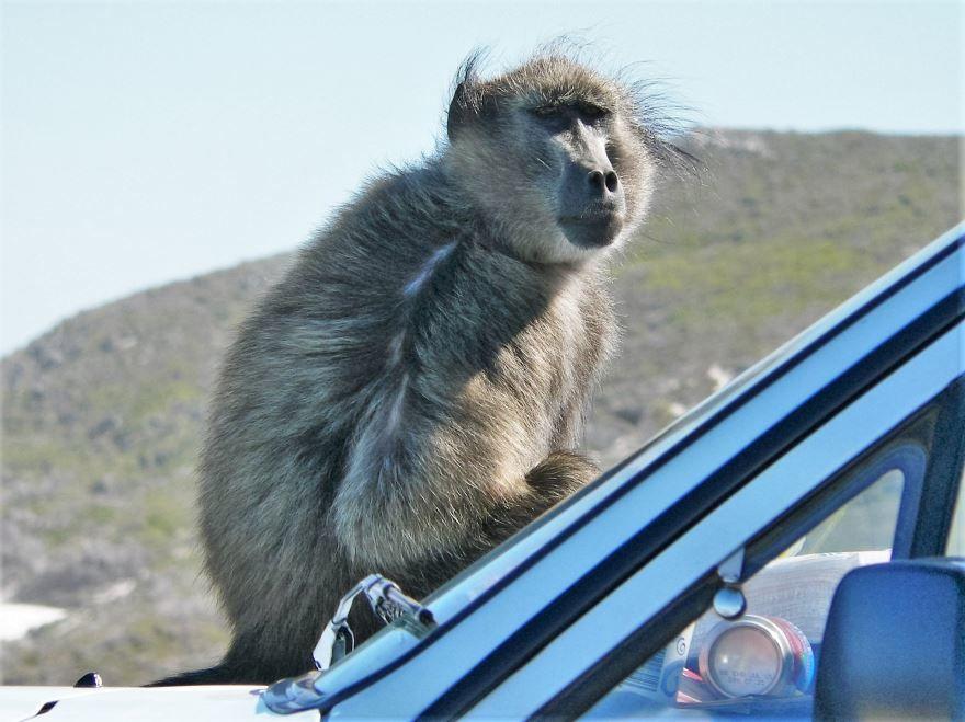 Скачать интересное фото обезьяны на природе летом