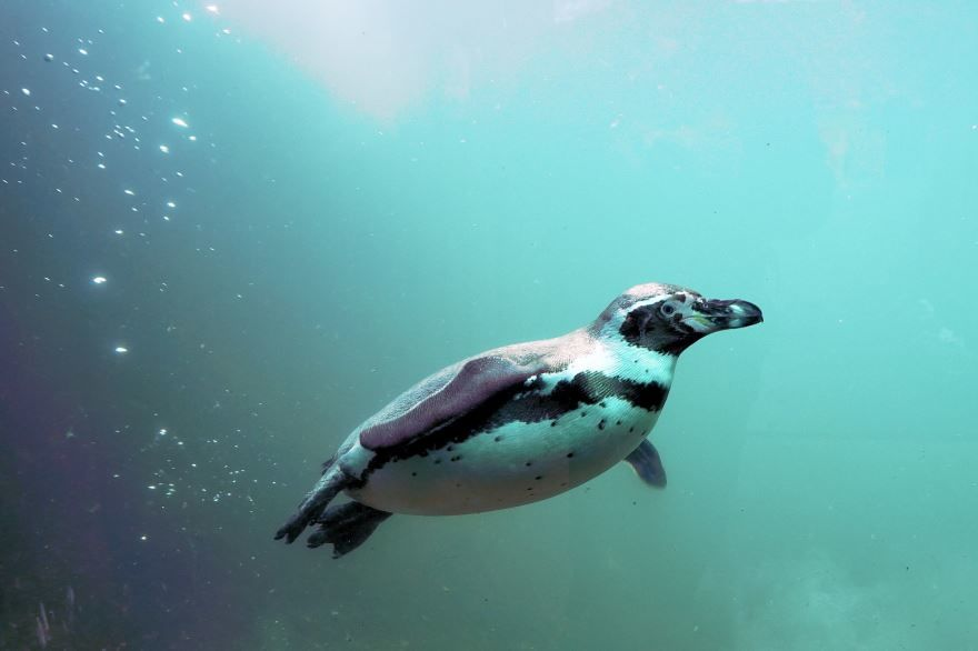 Смотреть красивое фото пингвины на природе