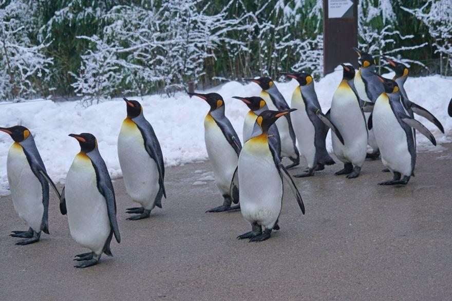 Скачать бесплатно картинку пингвинов в хорошем качестве