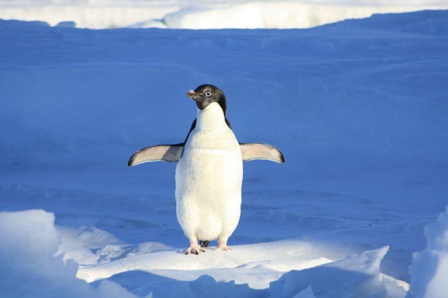 Скачать лучшую картинку пингвина бесплатно
