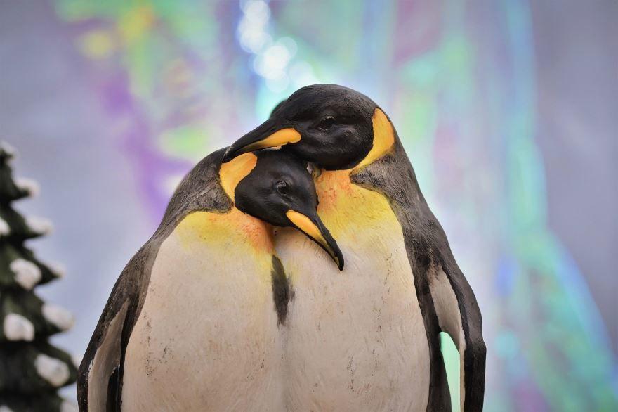 Смотреть необычное фото три пингвина
