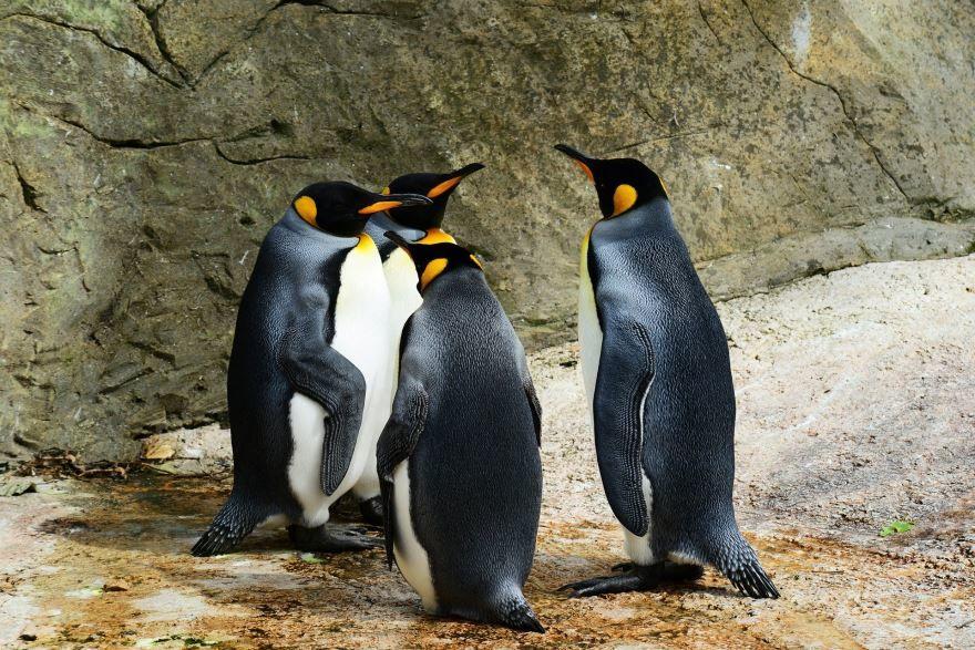 Скачать красивое фото пингвина на природе
