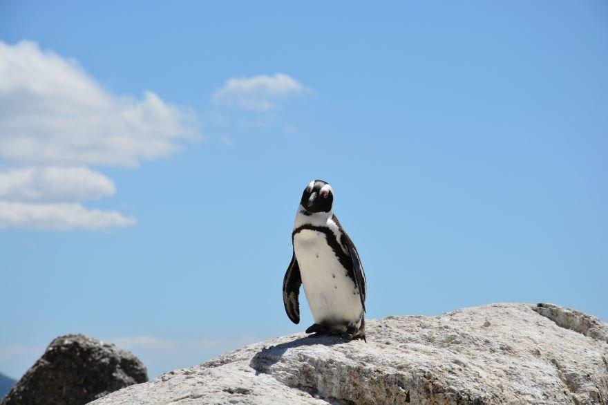 Красивое, необычное фото пингвина на природе