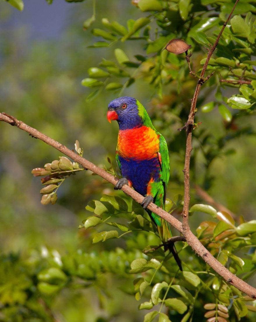 Смотреть бесплатно красивое фото попугай в домашних условиях