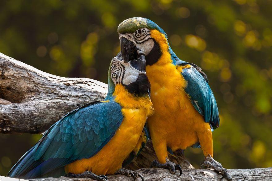 Смотреть замечательное фото два зеленых попугая