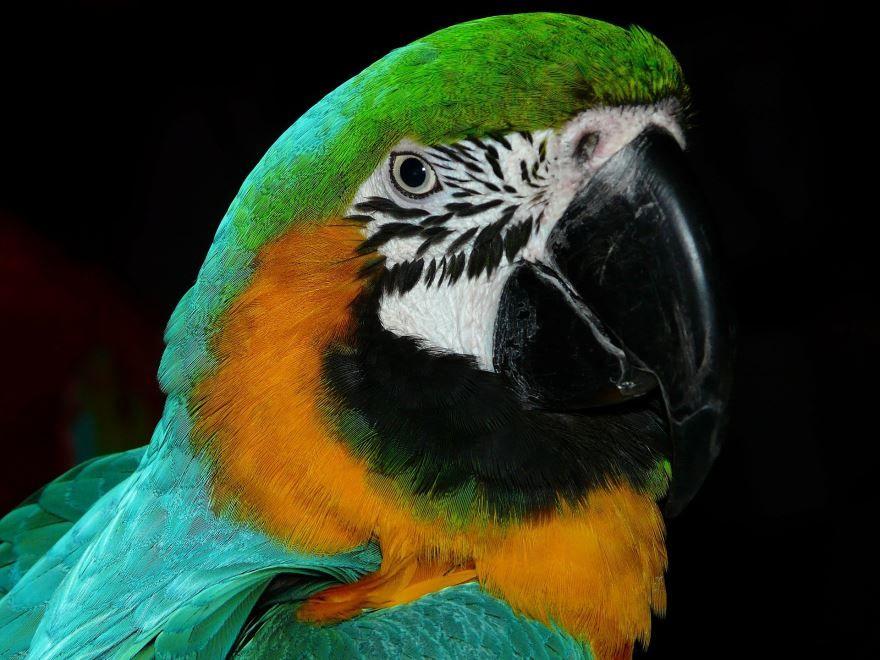 Смотреть картинку двух домашних попугаев бесплатно
