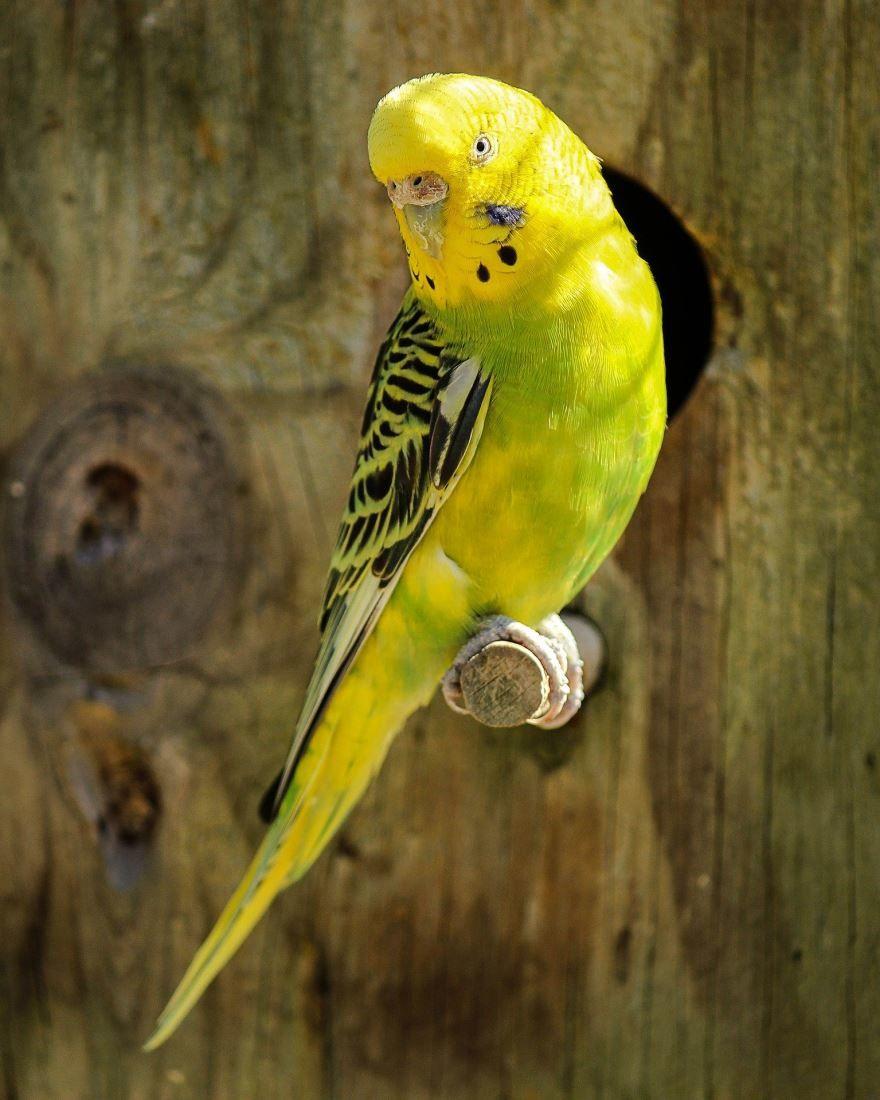 Скачать интересное фото попугая на природе летом