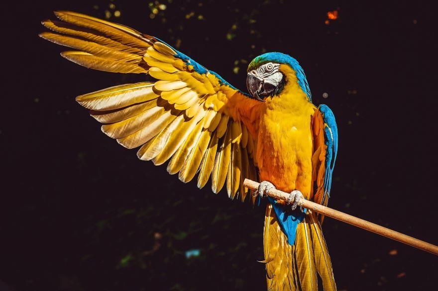 Смотреть интересное фото попугая на клетке